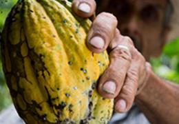 De olho no campo: tudo sobre a agricultura familiar no Brasil