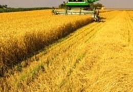 6 dicas para aumentar a produtividade em sua produção rural