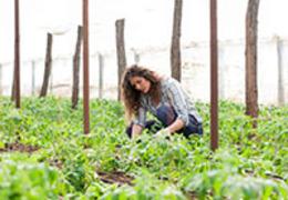 4 passos para otimizar o uso da terra no período de entressafra